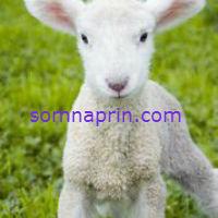 non habit-forming sleep aid somnaprin